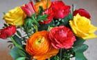 Roses, renoncules et anémones