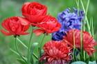Rouge et bleu floral