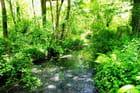 Ruisseau en Béarn