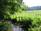 Ruisseau en juillet