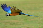 safari photos au zoo de branféré