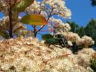 Saison des amours des scarabées