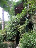 Salon de thé dans les arbres