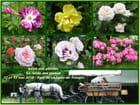 Salon des plantes - La ronde des jardins - 12 et 13 mai 2018