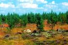 Sapinière près d'Arvidsjaur