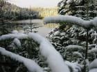 Sapins et lac