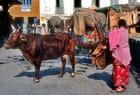 Scène de rue à Katmandou