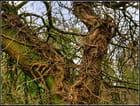 Sculpture arboricole