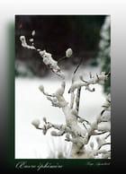 Sculpture hivernale