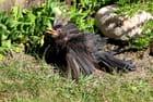 Séchage de plumes