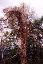 Sécheresse 2003