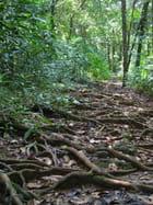Sentier en Amazonie