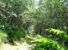 sentier ombragé