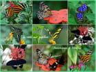 Serre aux papillons   (FA)