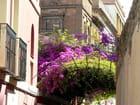 Seville au printemps