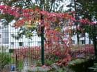 Signe d'automne