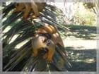 Singe-écureuil