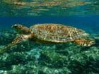 Snorkeling en compagnie d'une superbe tortue