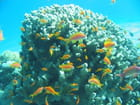 Snorkelling en Mer Rouge