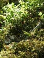 Sol en sous-bois