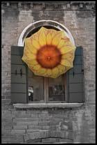 Soleil à la fenêtre
