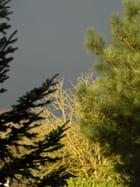 Soleil d'hiver et ciel d'orage