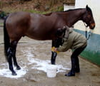 Soleil de cheval 2