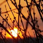 soleil en cage 2