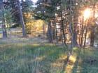 Soleil forestier