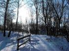 Soleil hivernal