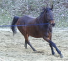 Soleil de cheval 1