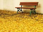 Solitude d'automne.