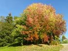 Sortie d'automne