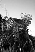 souche d arbre