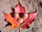Sourire d'automne