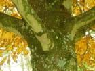 Sous l'arbre