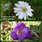 Sous le lilas