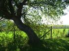 Sous le vieil arbre