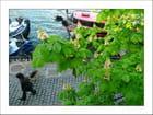 Sous les marronniers des quais de la Seine