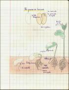 Souvenir d'école - Cahier de sciences - Le haricot