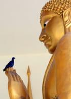 St Frabnçois est-il Bouddha?