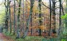 Octobre en forêt