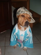 Supportrice de l'OM
