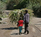 Sur la route du village