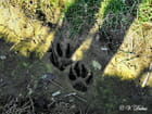 """Sur les traces du """"loup"""""""