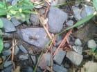Sympathique fourmi