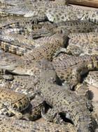 Tapis de crocs