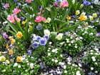 Tapis de printemps