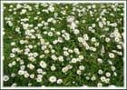Tapis naturel fleuri
