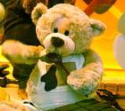 Teddy bear eat chocolate